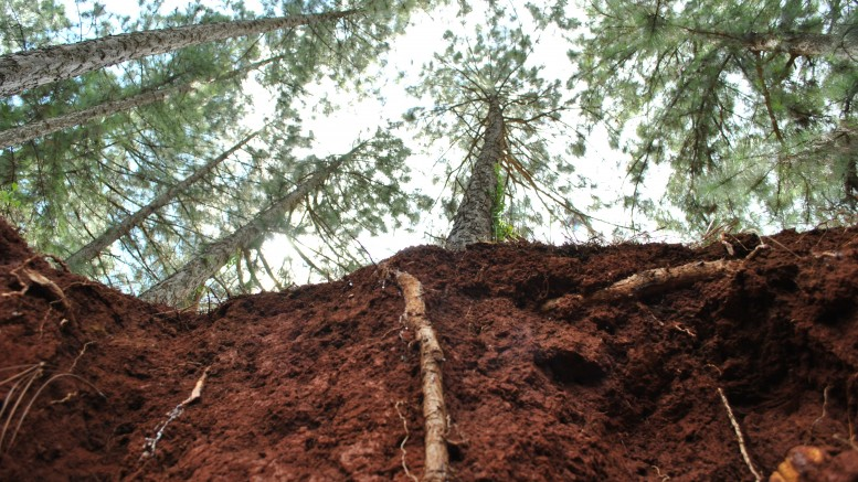 Suelo un recurso clave y en riesgo sobre la tierra for Recurso clausula suelo