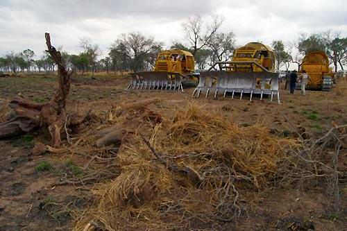 Desmonte para soja en Santiago del Estero
