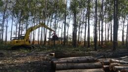 A mediados del siglo XX la fruticultura y la horticultura entraron en crisis  y la forestación significó un refugio para los productores del Delta