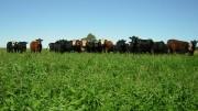 agricola-ganadero-