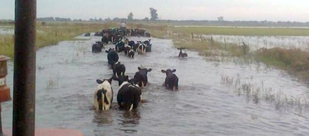 tambo inundado
