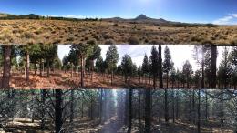 Se estudió cómo se comporta la biodiversidad en la estepa, así como pinares abiertos y  cerrados, entre otros sitios. Fotos: aportadas por los investigadores.