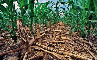 Labranza cero en maíz