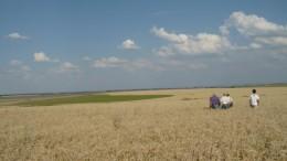 La investigación puede ser de utilidad para evaluar la sustentabilidad de los agroecosistemas pampeanos desde un punto de vista ecológico y asistir a productores y asesores en la toma de decisiones.