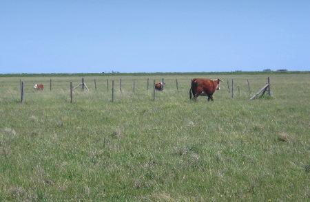 Clausura para exclusión del ganado bovino en un campo en la Depresión del Salado, provincia de Buenos Aires.