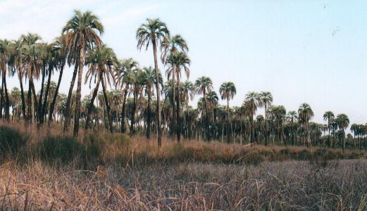 palmar_2001