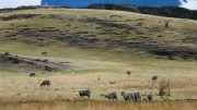 whypatagonia_mtp_overgrazing_03_opt