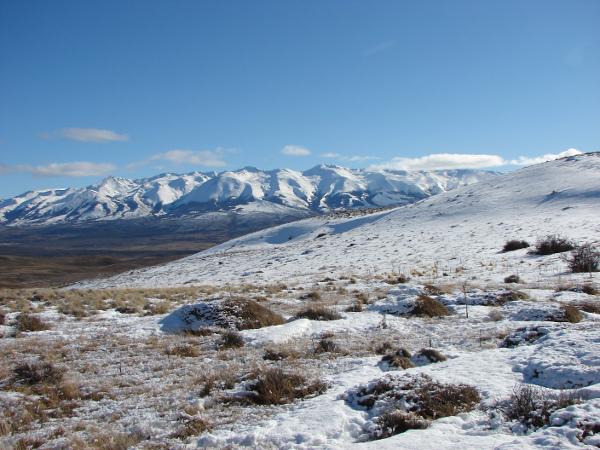 pastos bajo la nieve