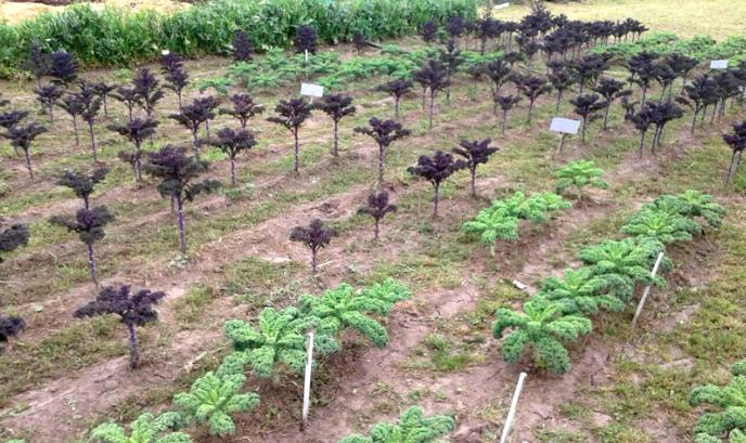 """""""Para visualizar el comportamiento del cultivo tomamos dos variedades (morada y verde) y se sembraron a dos densidades, una recomendada por la semillera y otra elegida por nosotros"""", contó Frezza."""