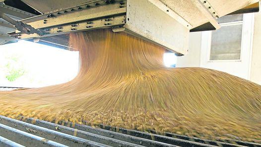 molienda maiz