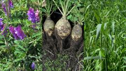 tres cultivos de servicios