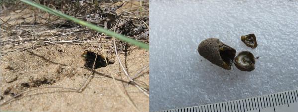 nido-suelo