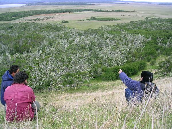 Desde la ladera de una lomada, los investigadores ubican a lo lejos un gran manchón de velosilla. Foto: gentileza P. Cipriotti