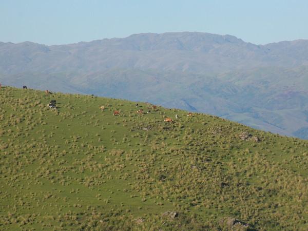 Ganadería cuenca arriba en zonas andinas de AmLat