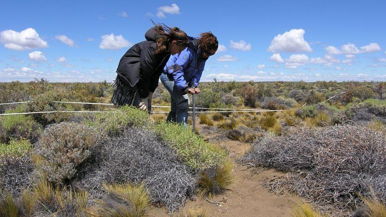 Raíces y pastoreo en Patagonia