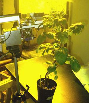 medición de fotosintesis