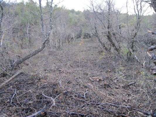 hojarasca y cobertura del suelo
