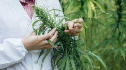 cannabis-investigacion_opt