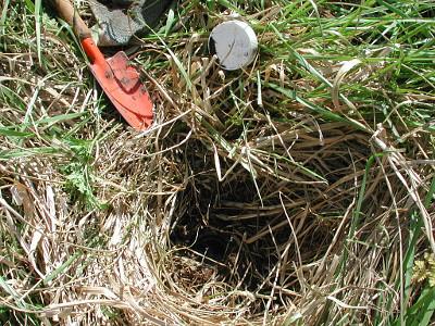 suelo a través del pastizal