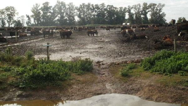 En la porción media y alta de la cuenca existen miles de establecimientos agropecuarios y agroindustriales que suelen arrojar sus efluentes sin un tratamiento adecuado.