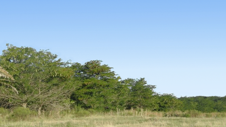 Monte de acacias
