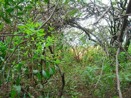 bosque desde adentro