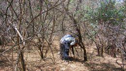 midiendo en el bosque
