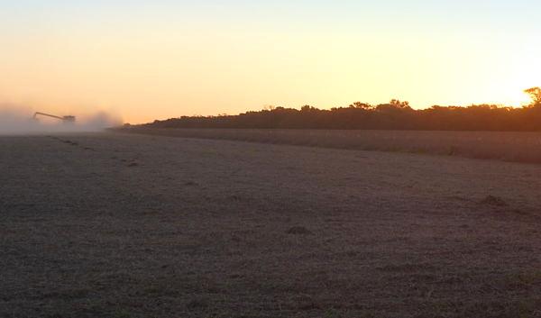 cosecha de soja en Sgo. Estero