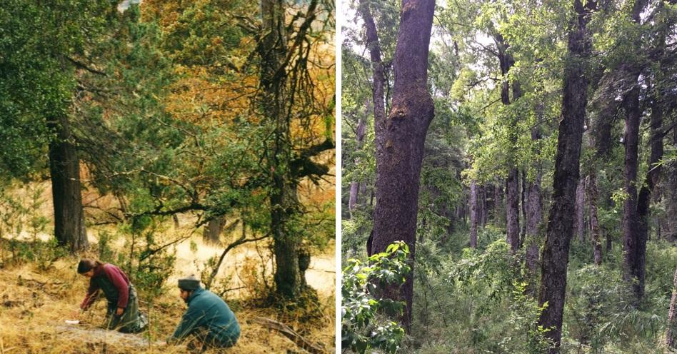 La investigadora evaluó la degradación la hojarasca en dos sitios con 850 mm de precipitación anual de diferencia y halló una relación novedosa entre la velocidad de descomposición y el contenido de magnesio en la biomasa