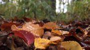 Los resultados del estudio de la FAUBA y del Conicet proponen una mirada alternativa a las teorías previas sobre la descomposición en bosques templados. Foto: Luis I. Pérez