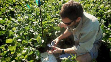 Tomás midiendo a campo