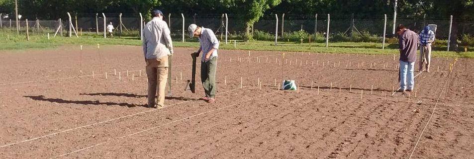 Los productores de la zona modificaron la densidad y fecha de siembra del maíz hasta encontrar rindes de entre 5800 y 7500 kg/ha.