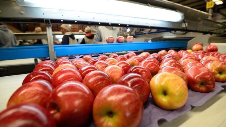 Los mercados internacionales le demandan a la fruticultura cada vez más certificados de calidad. Principalmente exigen alimentos inocuos que se produzcan cuidando al ambiente y a la salud de los trabajadores.