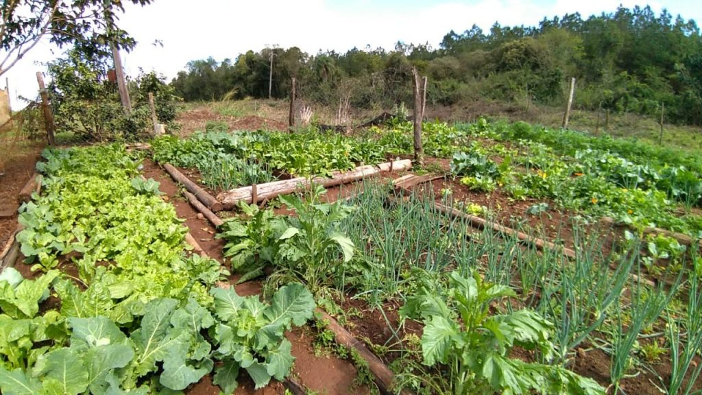 Además de tabaco, muchas familias campesinas de Misiones producen hortalizas para el autoconsumo. Lo hacen a través de sistemas con mayor diversidad de especies y menor uso de agroquímicos. Foto: Delfina Arancio Sidoti