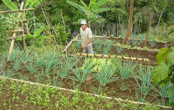 Las familias producen tabaco y usan intensivavente agroquímicos porque necesitan el dinero que obtienen de este cultivo. Foto: Delfina Arancio Sidoti