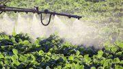Un estudio académico tomó el caso del cultivo de tabaco en la provincia de Misiones. Para maximizar el rendimiento y la calidad se usa una gran cantidad de agroquímicos que pueden perjudicar a los productores, a los consumidores y al ecosistema. Foto: Infocampo