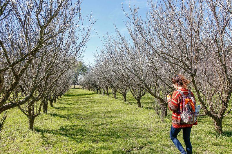 El sector agrario diversificó su actividad. Muchos productores y productoras que antes sólo proveían bienes, se convirtieron en emprendimientos rurales y comenzaron a prestar servicios turísticos