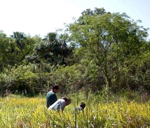 La expansión de actividades productivas que degradan los ecosistemas es una amenaza para la diversidad cultural y biológica en todo el planeta