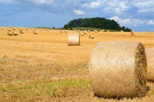 En tiempos de sequía, los productores pueden optar por suplementar al ganado con distintas tipos de forraje, desde heno hasta pasturas, y esto incide sobre la carga animal