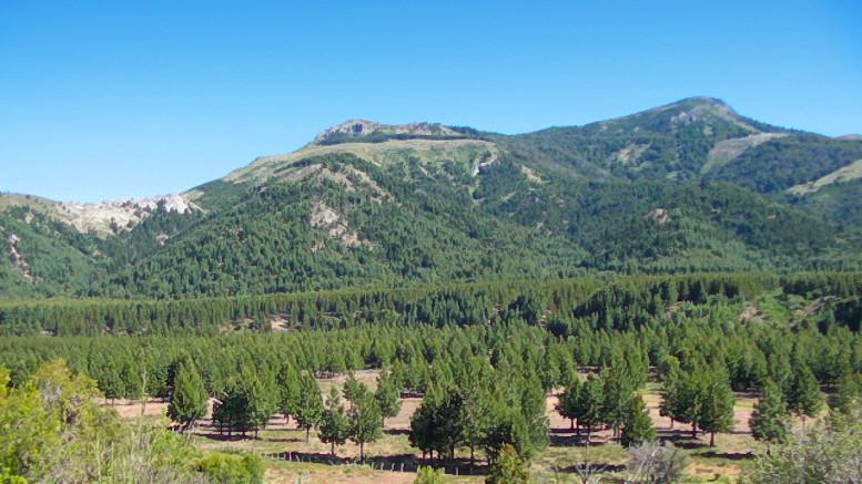 Forestación en San Martín de los Andes