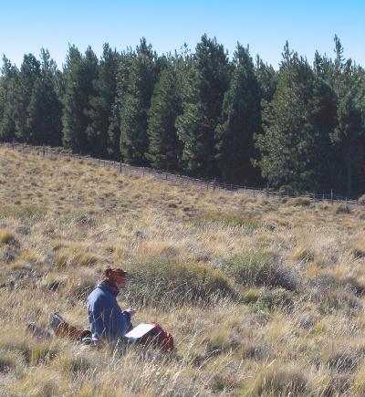 """""""Comprobamos que el carbono secuestrado en las plantaciones de pino ponderosa quedaba en la madera y en la hojarasca, pero no en el suelo, que es un compartimento más estable"""" (P. Araujo)"""