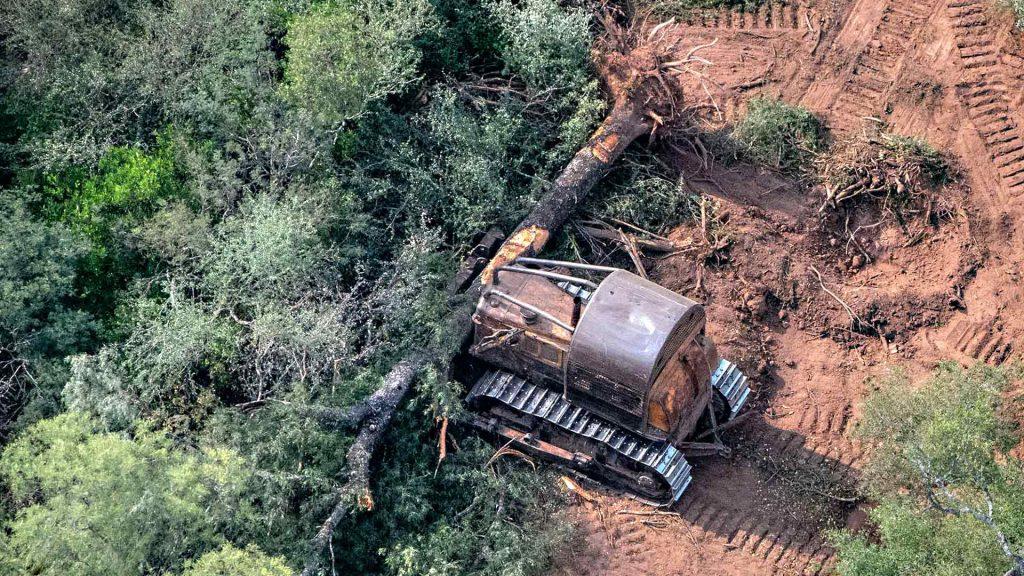 Con los desmontes se pierden los servicios ecosistémicos que proveen los bosques, como la regulación hídrica, la conservación de la biodiversidad y del suelo, y la fijación de gases de efecto invernadero