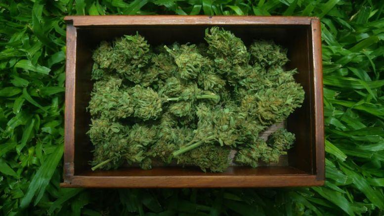 """""""Hace muchos años que cultivadores y organizaciones generan información y conocimiento local sobre el Cannabis, pero no resultan en datos oficiales. Esto es una consecuencia de la ilegalidad"""" (I. Peralta) Foto: GET Cannabis"""
