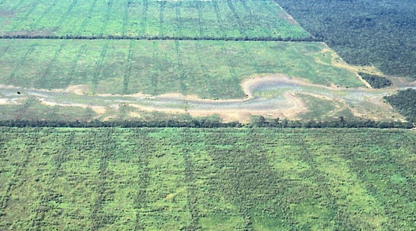 El ascenso de napas vinculado a la deforestación también podría ocasionar daños asociados a una mayor frecuencia e intensidad de las inundaciones. La imagen muestra la salinización por desmonte excesivo alrededor de cauce natural