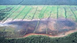 Salinización en un campo agrícola en la región Chaqueña en Paraguay