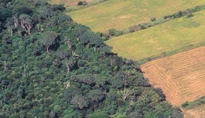 Una de las causas de que la Argentina hoy sea un gran exportador de granos es haber triplicado el área cultivada. Esto se logró, en muchas casos, a expensas de deforestar el monte nativo, con un alto impacto en el ambiente