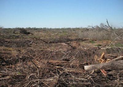Para Roberto Fernández, las elecciones y demandas alimentarias de los consumidores pueden terminar impactando en el uso y deterioro de los recursos naturales. La deforestación es una de los tantos impactos negativos sobre el ambiente. Foto: chacopordia.com