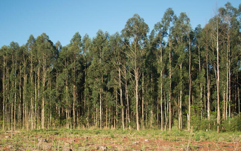 Los hogares de PIP se encontraban a menos de 100 metros de las plantaciones