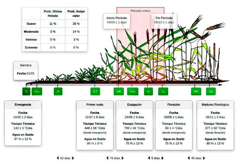 Esquema del ciclo del cultivo de trigo indicando los estadios fenológicos de acuerdo con la escala de desarrollo de Zadoks
