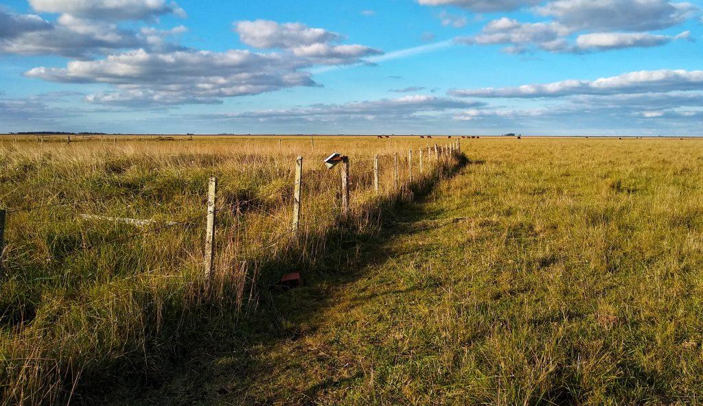 """""""Fue sorprendente que al caminar por el pastizal se veía muy claramente el contraste entre los diferentes tratamientos. Las parcelas fertilizadas y pastoreadas eran como huecos entre la vegetación de 30 centímetros"""" (S. Campana)"""